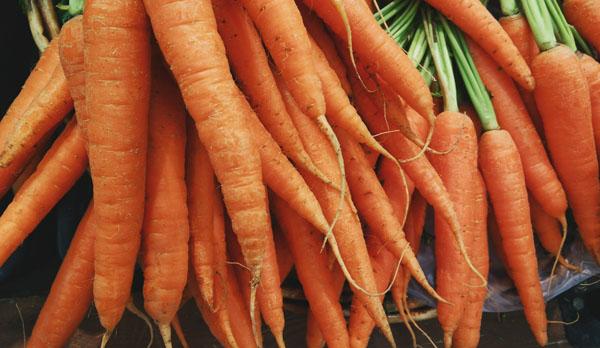 Cuando Plantar Zanahorias La Huertoteca Huertos Urbanos La zanahoria es una planta muy valiosa por su alto contenido de minerales y vitaminas. cuando plantar zanahorias la
