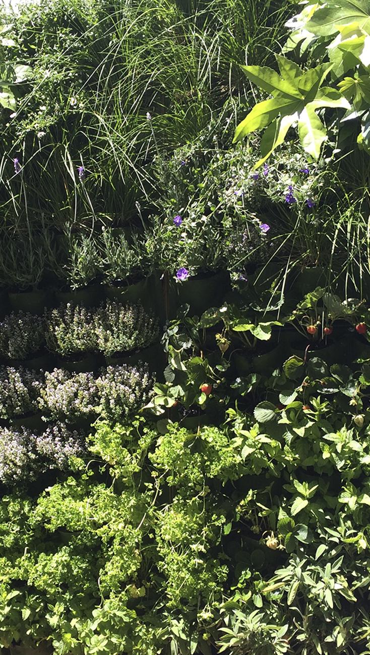 Jardines verticales comestibles