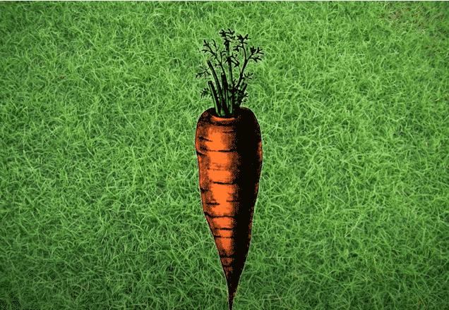 Curiosidades de las zanahorias