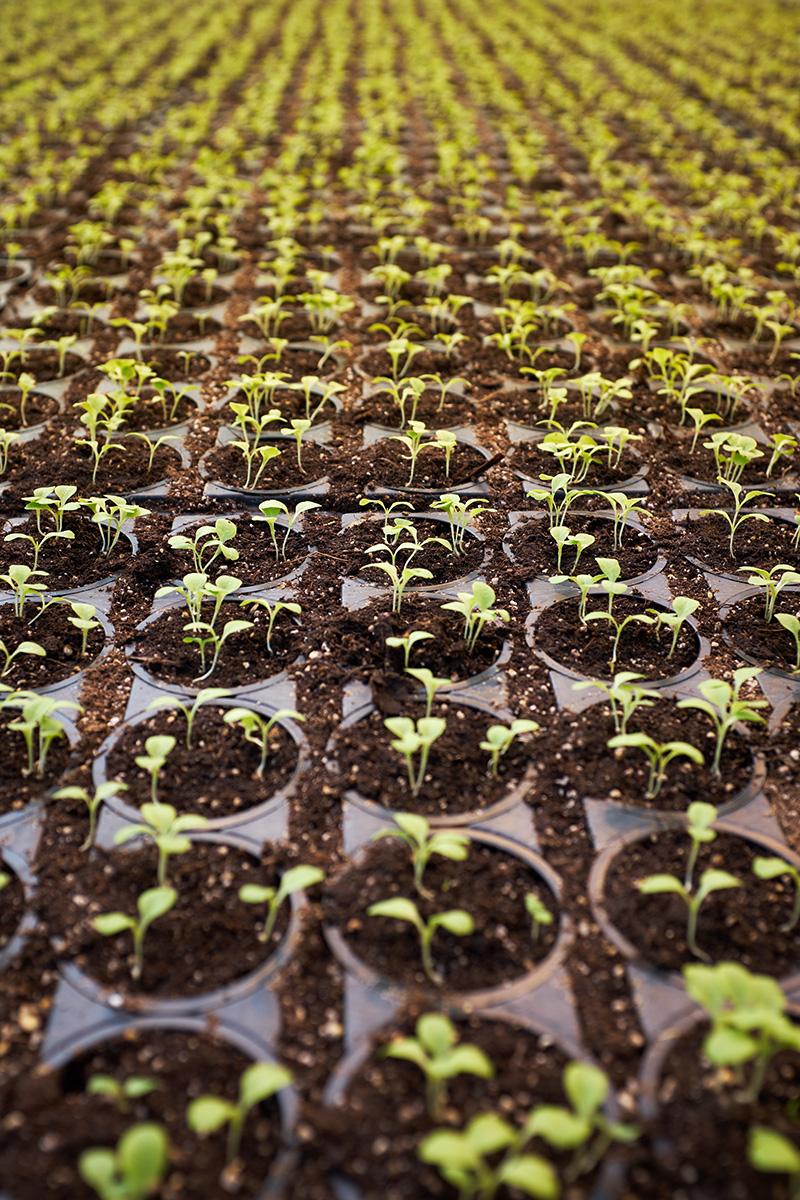 Qué plantar en el huerto en marzo
