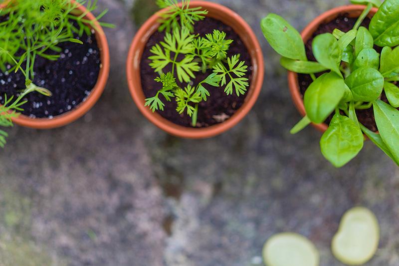 Qué plantar en el huerto en abril