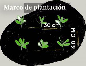 Marco de plantación entre cultivos