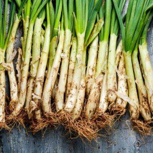 Calçots: cultivo huerto urbano