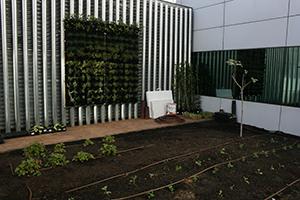 Jardines verticales y huertos tradicionales