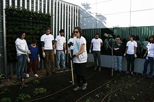 Actividades para fundaciones sobre huertos urbanos