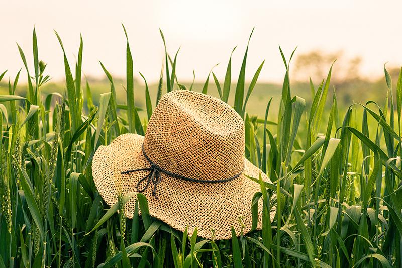 Refranes de agosto para el huerto