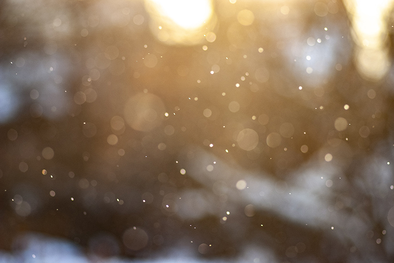 Refranes de diciembre para el huerto