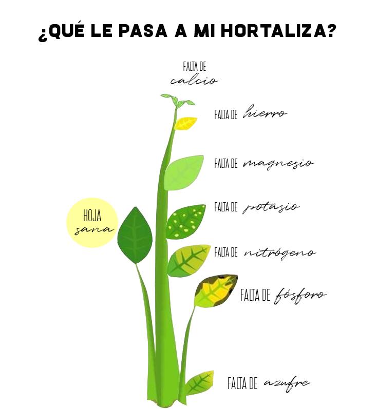 Falta de nutrientes en hortalizas