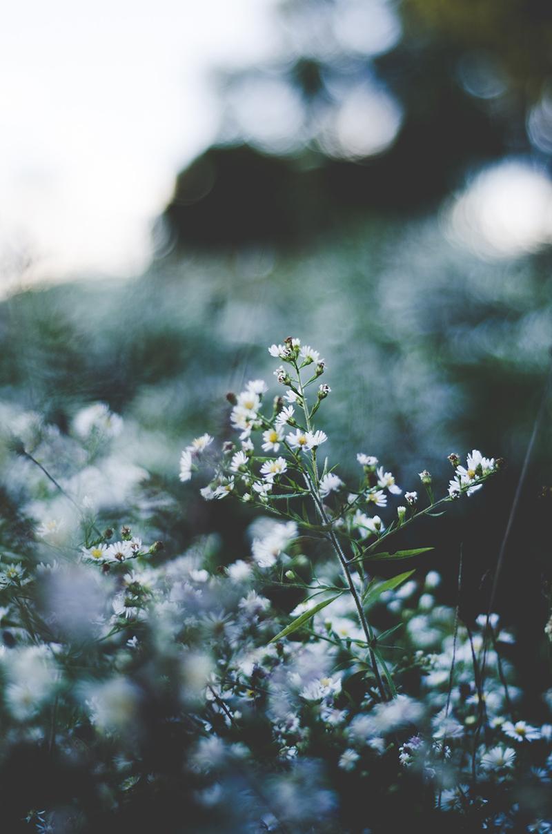 Refranes de abril para el huerto