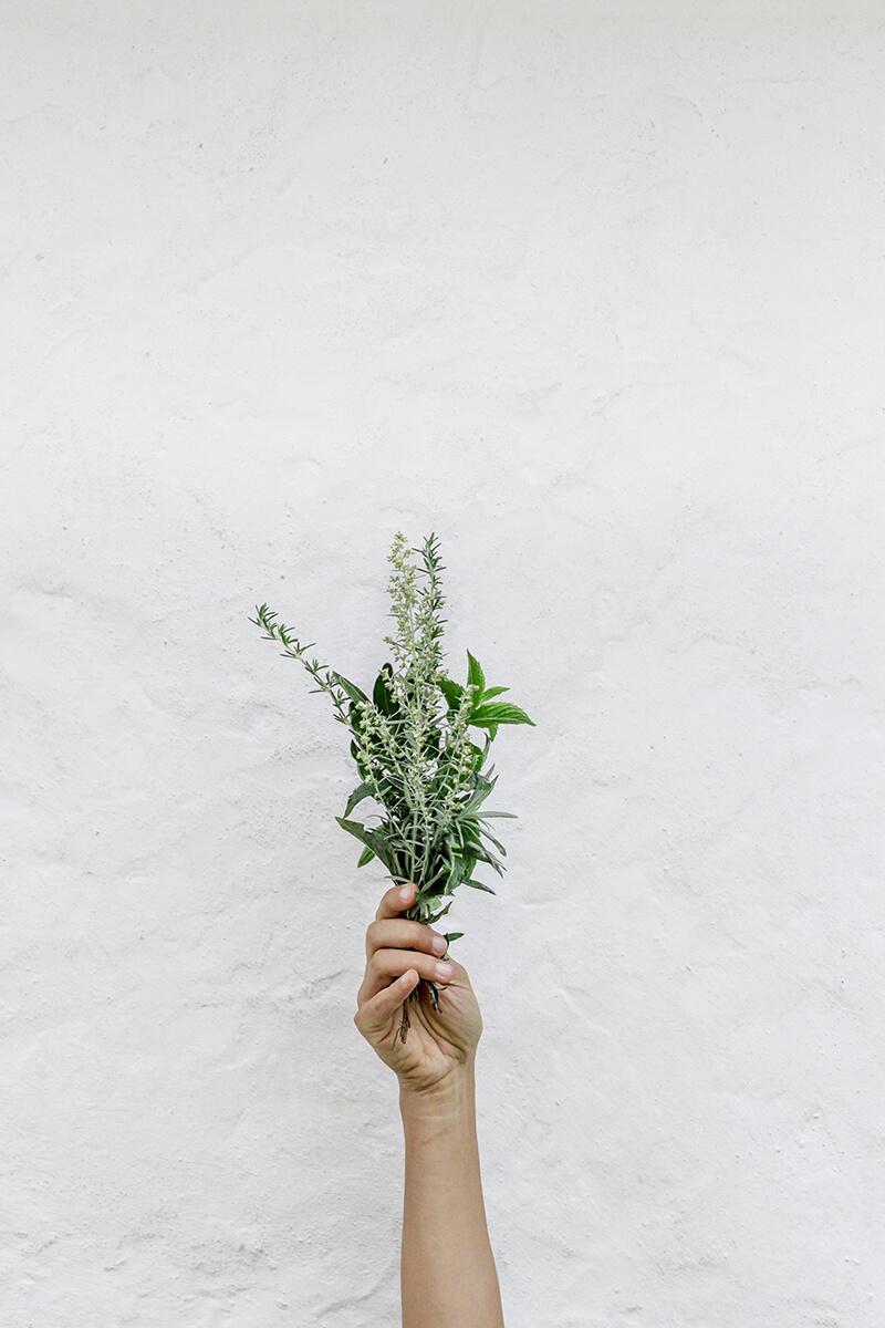 Menta, planta aromática