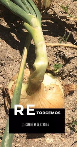 Retorcer el cuello de la cebolla