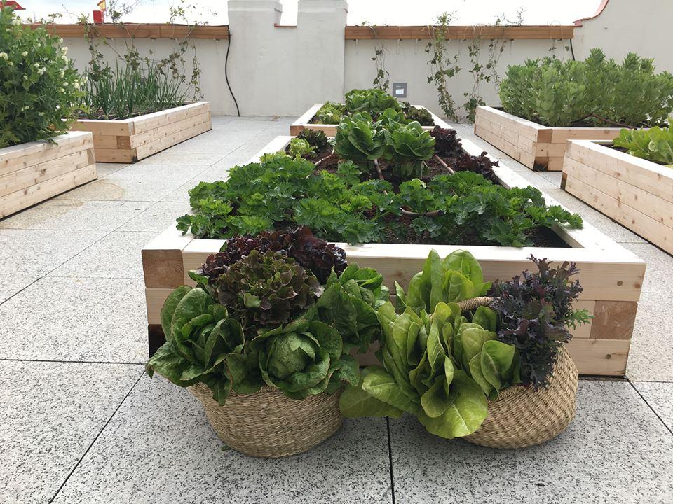 Consejos Para Cultivar Un Huerto Ecológico En Casa La Huertoteca