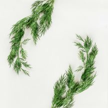 Eneldo: planta aromática