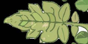 Falta hierro hojas