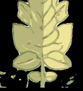Falta de nitrógeno en las hojas