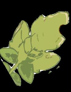 Falta potasio hojas