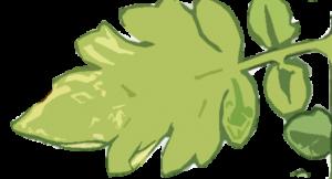 Falta de zinc hojas