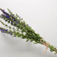 hisopo: planta aromática