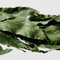Laurel: planta aromática