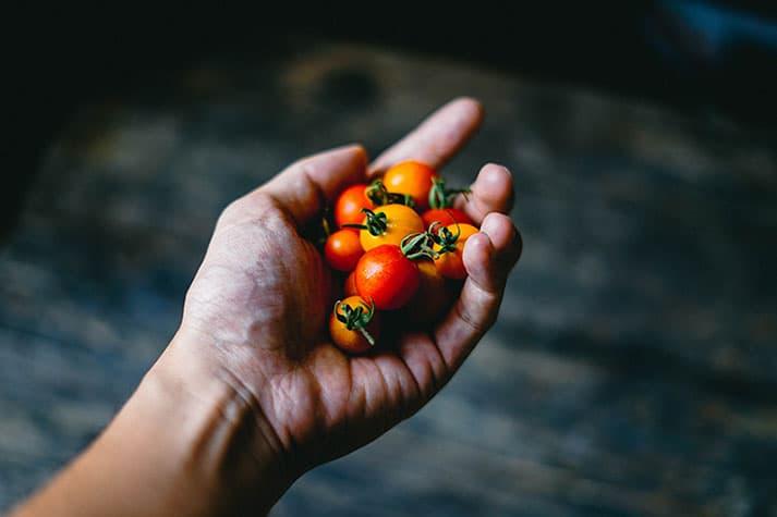 ¿Cuál es el mejor mes para plantar tomates cherry?