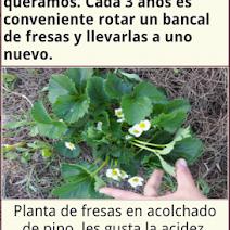 Ecohuerto app