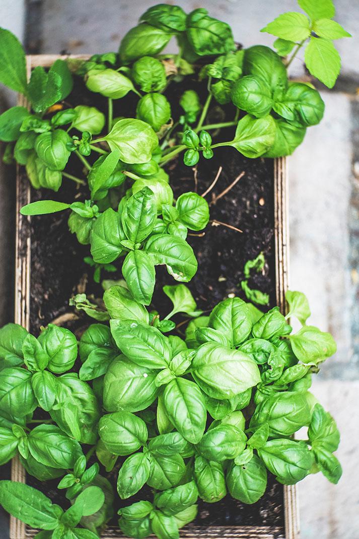 cultivos para plantar en semisombra
