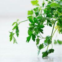 Hierbas aromáticas para plantar en otoño