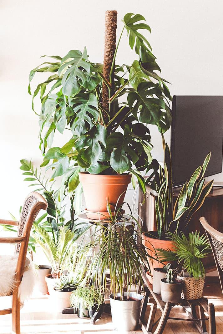 abonos naturales para plantas