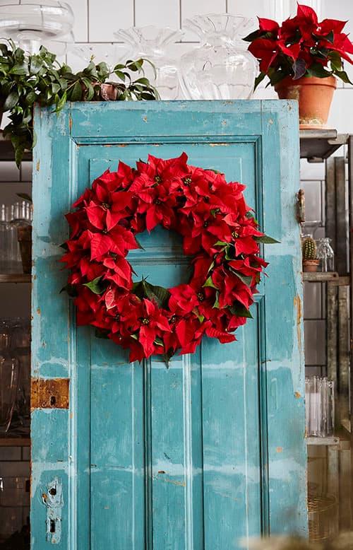 Decoracion Navidad flor de Pascua (poinsettia) puerta