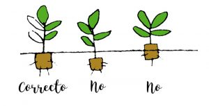 Cómo plantar el plantel