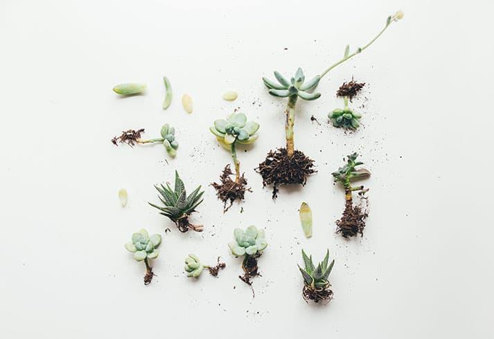 Macetas para plantas