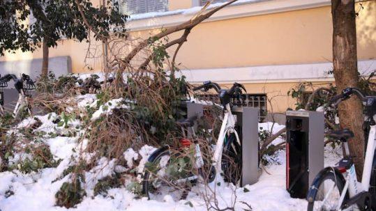 Efectos Filomena en los árboles de Madrid
