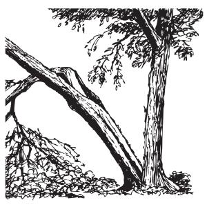 Árbol dañado gravemente