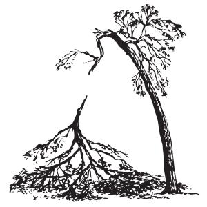 Árbol difícil de recuperar