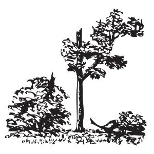 Árbol irrecuperable