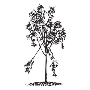 Árbol joven dañado pero recuperable