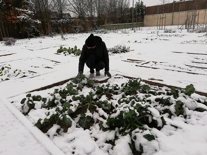 Protección contra la nieve y las heladas en el huerto