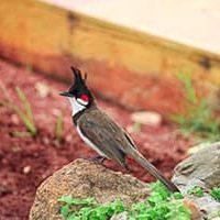 Pájaros hortalizas en el huerto