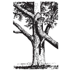 Poda en árbol dañado