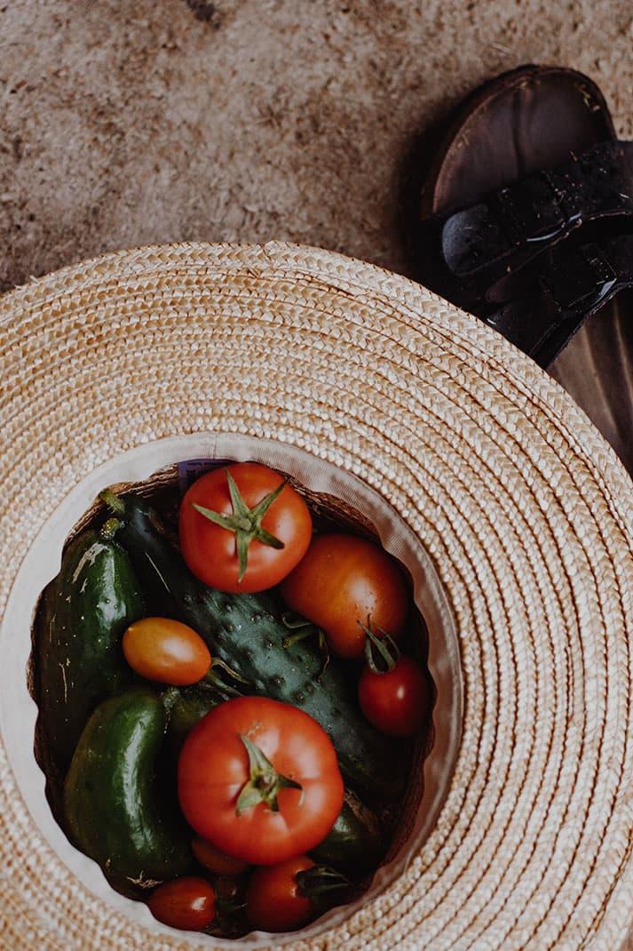 Qué hortalizas podemos recoger en el huerto en septiembre