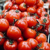Recoger tomates en el huerto en septiembre